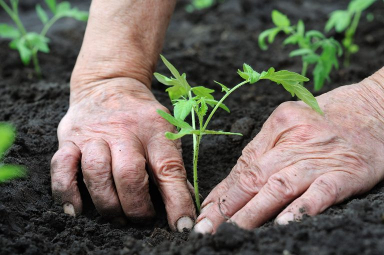 Tohumculuk sektörü 2023 yılı üretim hedefini 1 milyon tondan 1.5 milyon tona yükseltti