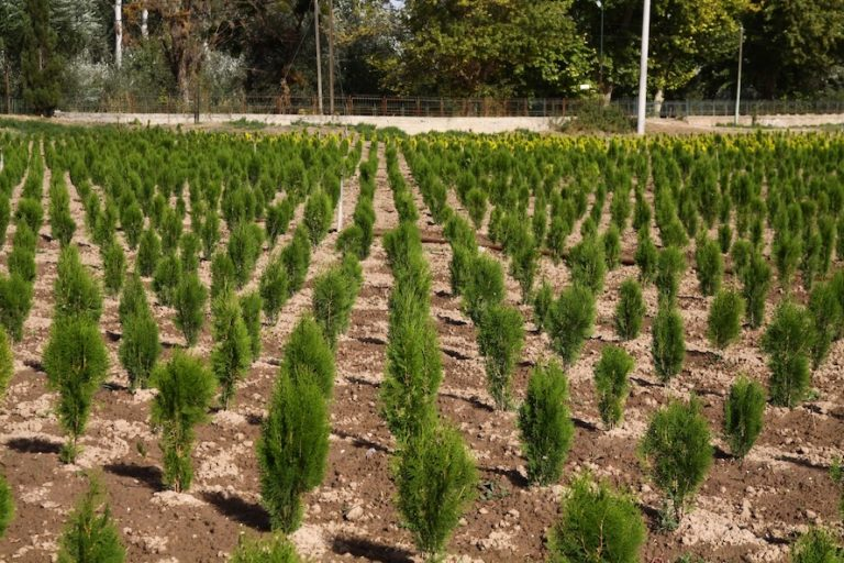 'Her insan doğaya 210 ağaç borçlu'