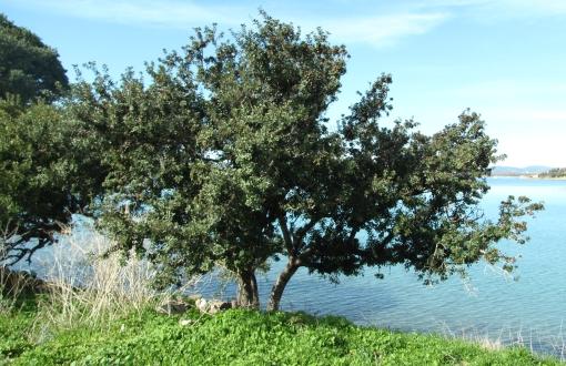 ağaç_1
