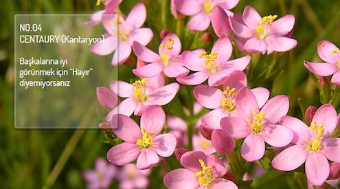 İngiliz doktor, araştırmacı ve bakteriolog olan Edward Bach'ın (1886 – 1936)'ın 1930 yılında yarattığı ve kendi adını verdiği Bach Flowers Terapisi, yabani bitkilerin ve ağaçların çiçeklerinden üretilen ve her biri farklı bir duygu durumu için kullanılan karışımlardan oluşuyor.
