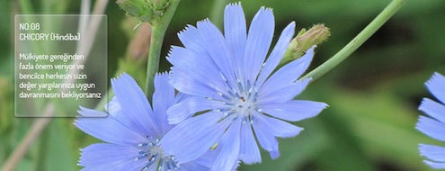 bacflowers8