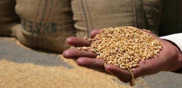 Buğday fiyatı 2017'de yüzde 10 arttı 0,89 TL oldu
