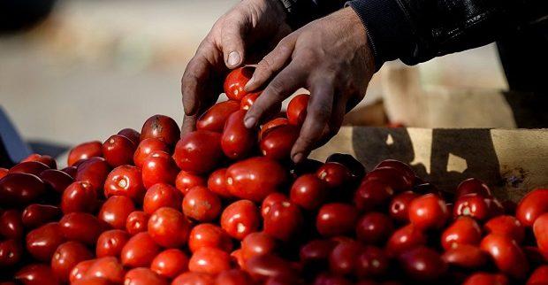 'Azerbaycan, Türkiye'de üretilen domatesleri Rusya'ya ihraç ediyor olabilir'