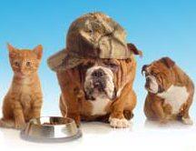 Türkiye kedi-köpek maması pazar büyüklüğü: 500 milyon TL