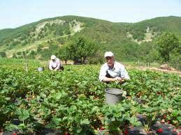 AB Kırsal Kalkınma Programı kapsamında 564 projeye 261 milyon lira hibe