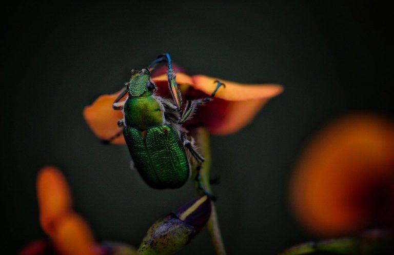 Her yıl böceklerin yüzde 2'si yok oluyor